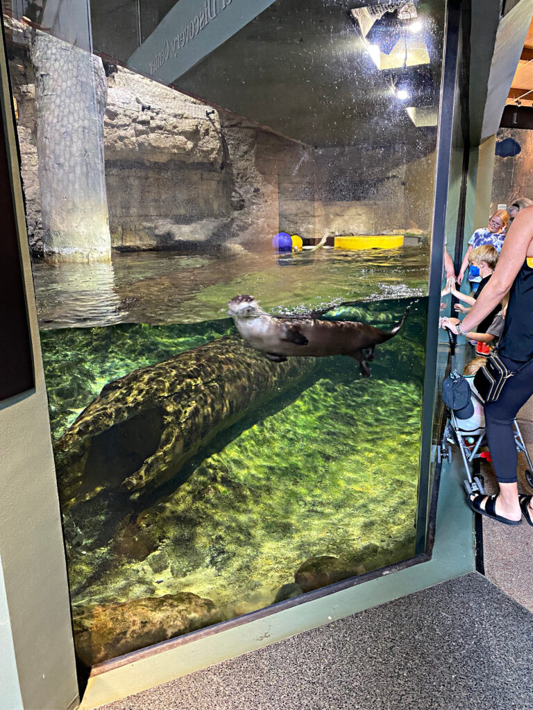 5 Must See Exhibit at the Mississippi River Museum